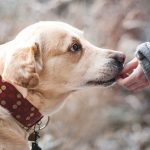 how-to-train-your-new-rescue-dog-giving-dog-treats
